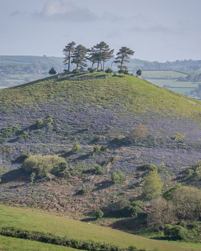 Colmers Hill - James Loveridge image