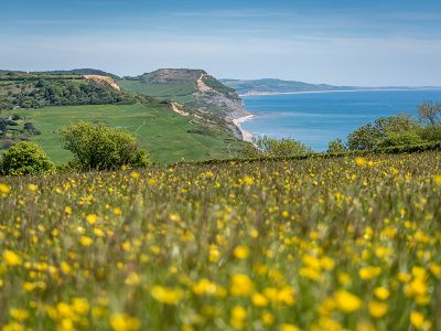 Charmouth - James Loveridge image